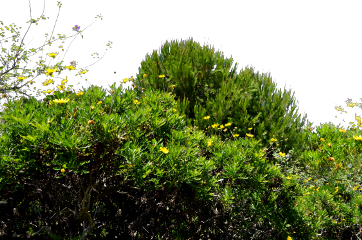 freetoedit freesticker remixit vegetation bush