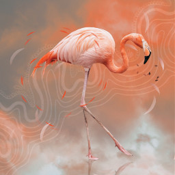 summer etheral flamingo sky dreamy freetoedit