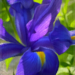 iris blue beautyful mygarden vibrant