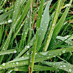 raindrops rainyday summer nature macrophotography pcnaturethroughmyeyes naturethroughmyeyes pcmothernature mothernature