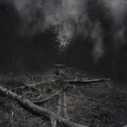 freetoedit forest asphalt fog dust ftestickers