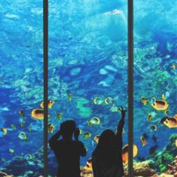 freetoedit aquarium fishes love couple irctouchthesky
