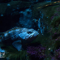 freetoedit photography fish sealife nature