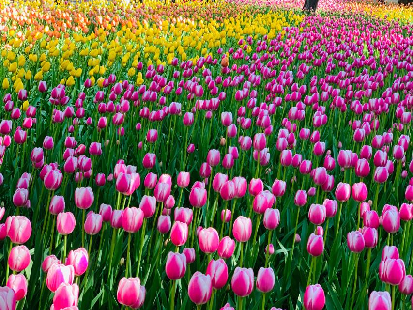 Flowers Sea #freetoedit