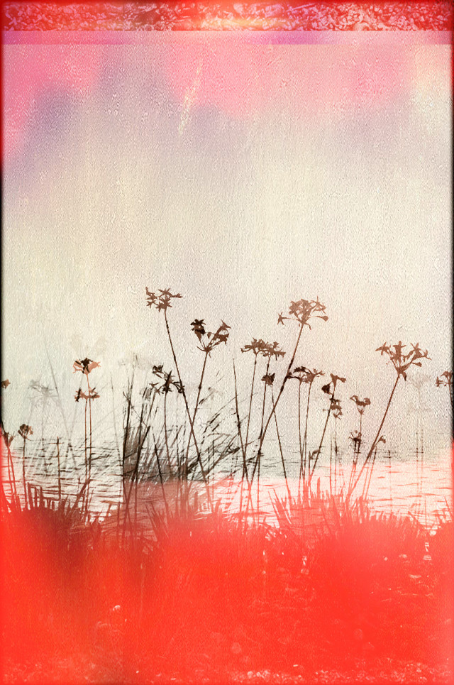 #freetoedit #picsartedit #beach #flower