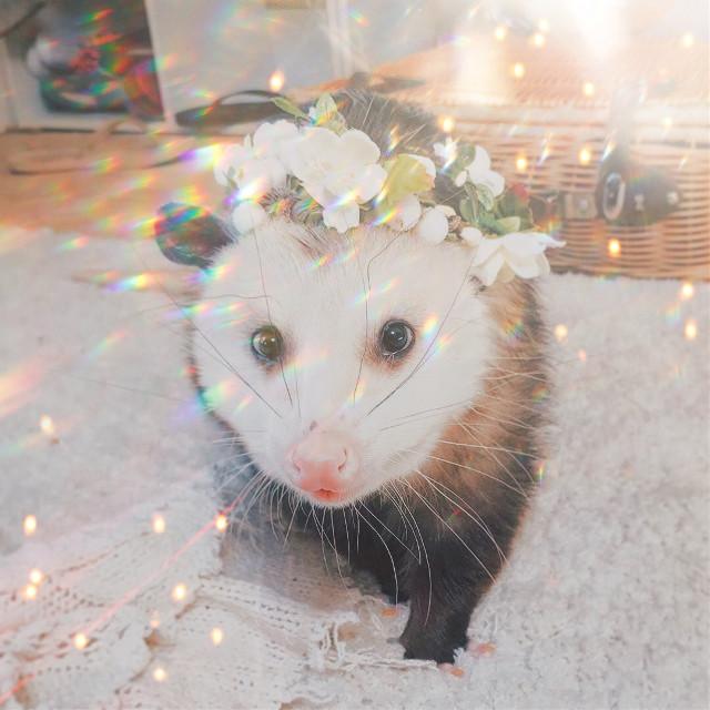 #opossum