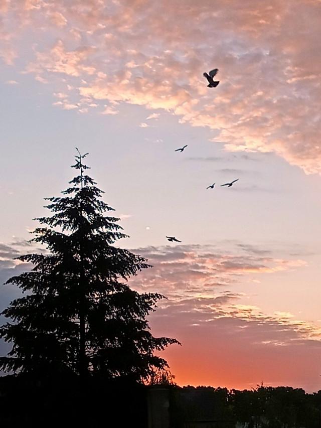 #freetoedit #photooftheday #myphoto #morning #sunrise #clouds #sky#horizon #birds