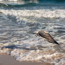 nature beachscenery summertime wavescrashing seagullsinflight freetoedit