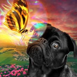 freetoedit rcholographicbutterflies