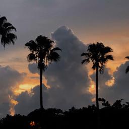 cali in tainan taiwan palmtree freetoedit