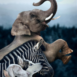 freetoedit animals ufos elephant giraffe
