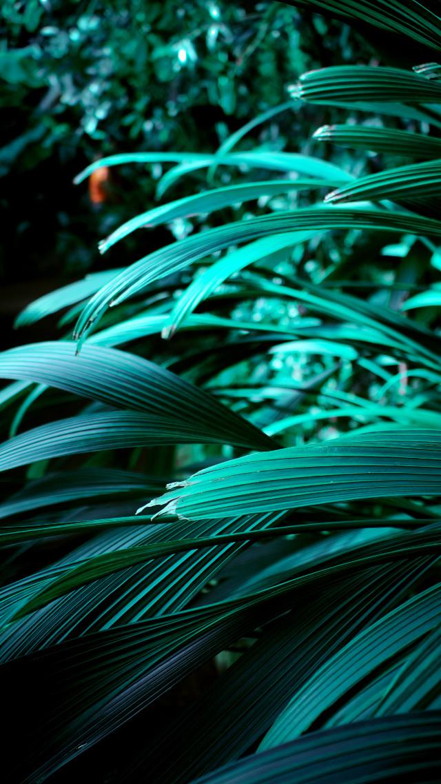 #green #naturephotography #photos #esitit #features #tones #brighttones