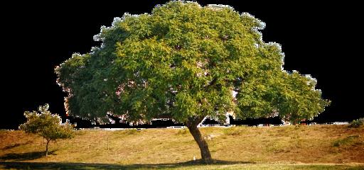 freetoedit tree ftestickers grass green