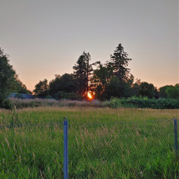 sunset nature grass trees fence freetoedit