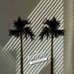 freetoedit summer palms madewithpicsart