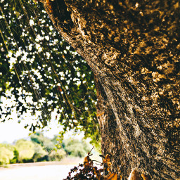 weboflies spiderweb treeart naturalbeauty caligirl