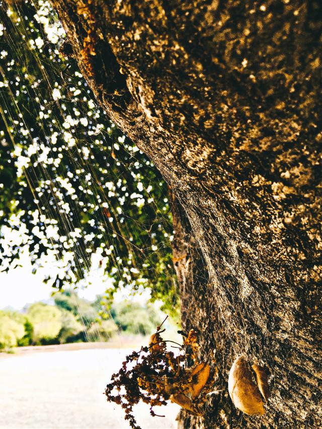 #weboflies #spiderweb #treeart #naturalbeauty #caligirl #hikelife #mood #vibe #seeme #mymind  #myeye #bchez #photography #edit