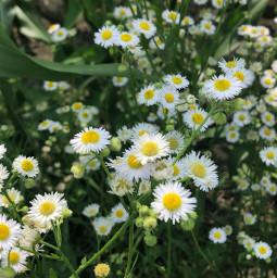 freetoedit flower iowa natural nature