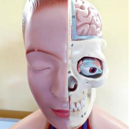 medicine anatomy human head