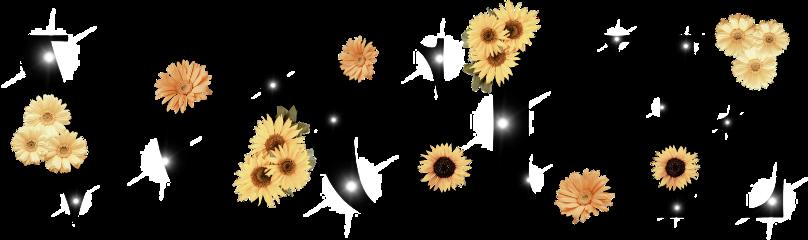 freetoedit vouge sunflower