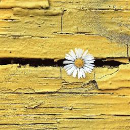 putafloweronit minimalism simplicity woodenfence oldwood freetoedit