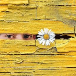 frida peeking hello fridakahlo unibrow_queen freetoedit