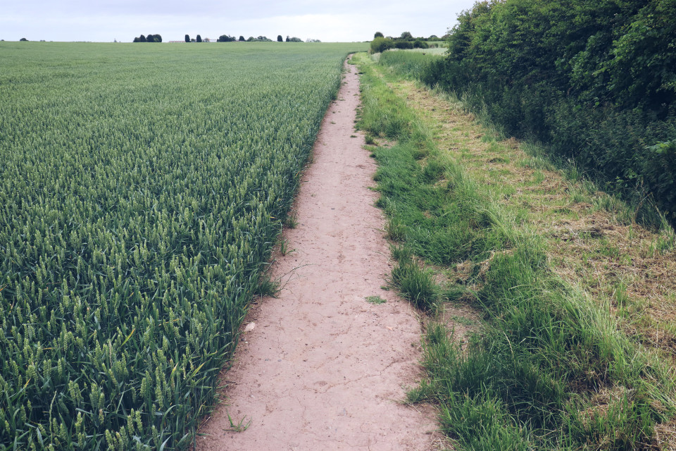 Just liked this view #pathway #landscape #field #outandabout  #freetoedit