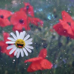 daisy flower stickers happiness poppy freetoedit