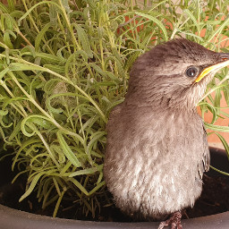 birdsphotography birdslovers animallovers rescuebird