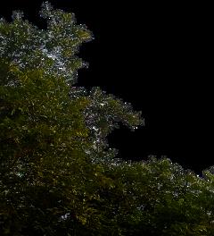 freesticker remixit bush vegetation freetoedit