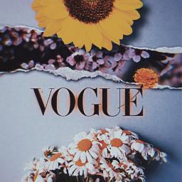 freetoedit vogue flower yallow butterfly ircchamomilesanddaisies chamomilesanddaisies