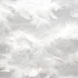 fondoblanco backgroundwhite plumas feathers white freetoedit