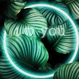 freetoedit plants iloveyou bluecircle neonblue