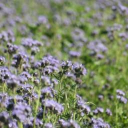 freetoedit naturephotography landscapes flowerpower flowerfield