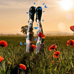 freetoedit legs butterflies flowers sunset ftestickers