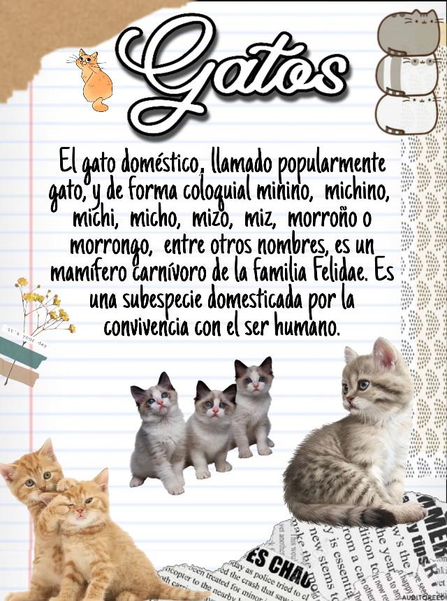 #Gatitos