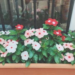 gardenflowers colors