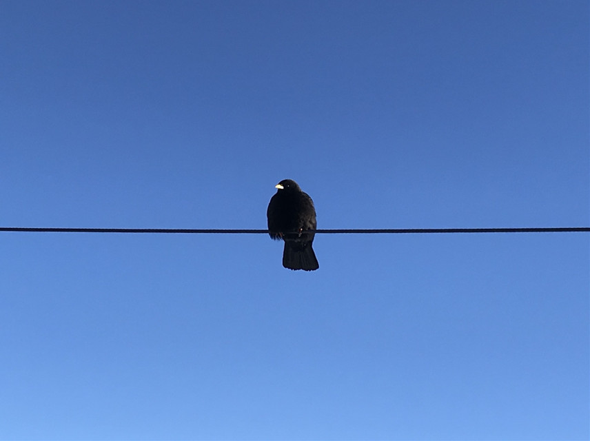 Thank you for 100 likes!  #bird #sky #wire   #freetoedit  #pctwohues #twohues