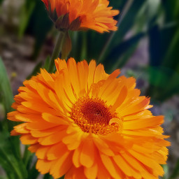 photography flowerphotography orangeflower