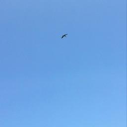 freetoedit ontheroad sky birds bluesky