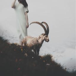 unsplash goat scenic grow filmeffect freetoedit