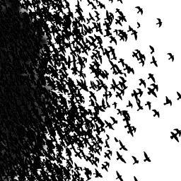 freetoedit birds flyingbird birdefficte flyingbirds