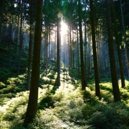 freetoedit landscape forest woodland trees