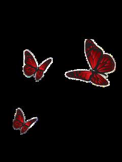 interesting butterfly instagram instagrammask instagramstory freetoedit
