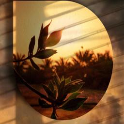 sunset fantasy shadoweffect shadowmask imagination freetoedit