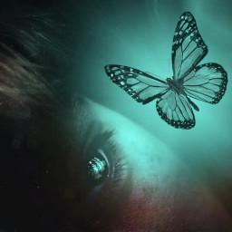 freetoedit blue butterfly bluebutterfly mariposa irctheeyeshaveit theeyeshaveit