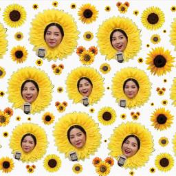 freetoedit sunflower sunflowers sunflowersticker kpop