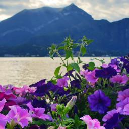 freetoedit lake mountain flower flowers
