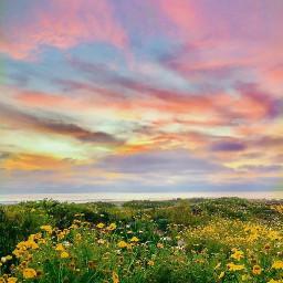 beautifulmorning nature naturehues colorfulworld wildflowers freetoedit