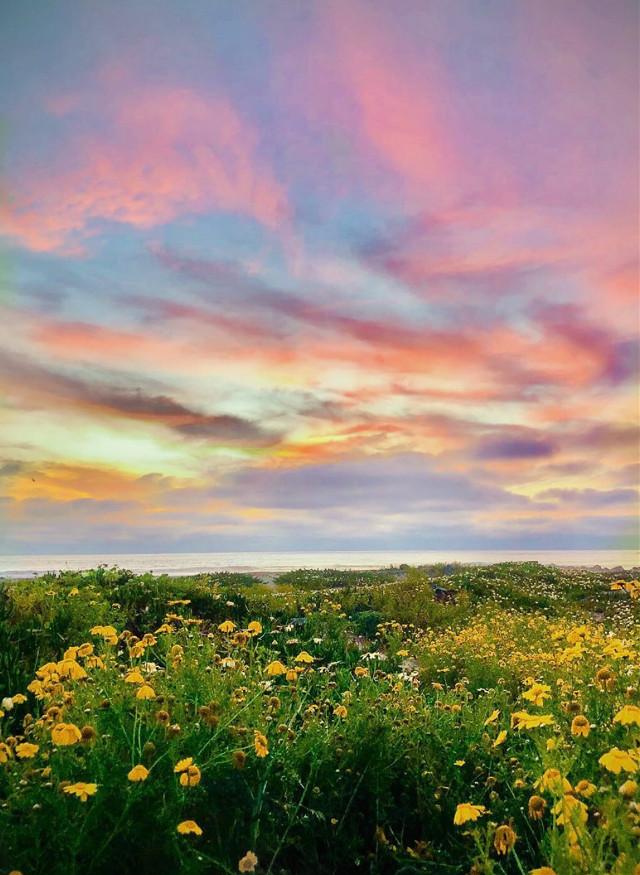 #beautifulmorning #nature #naturehues #colorfulworld  #wildflowers #seaview #horizon #sunrisesky #beautifullight #sunrisecolors #skyandclouds #naturephotography                                                                                              #freetoedit